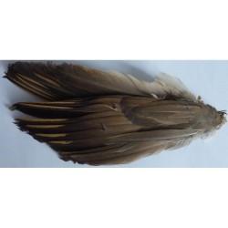 Paire d'aile de perdrix rouge
