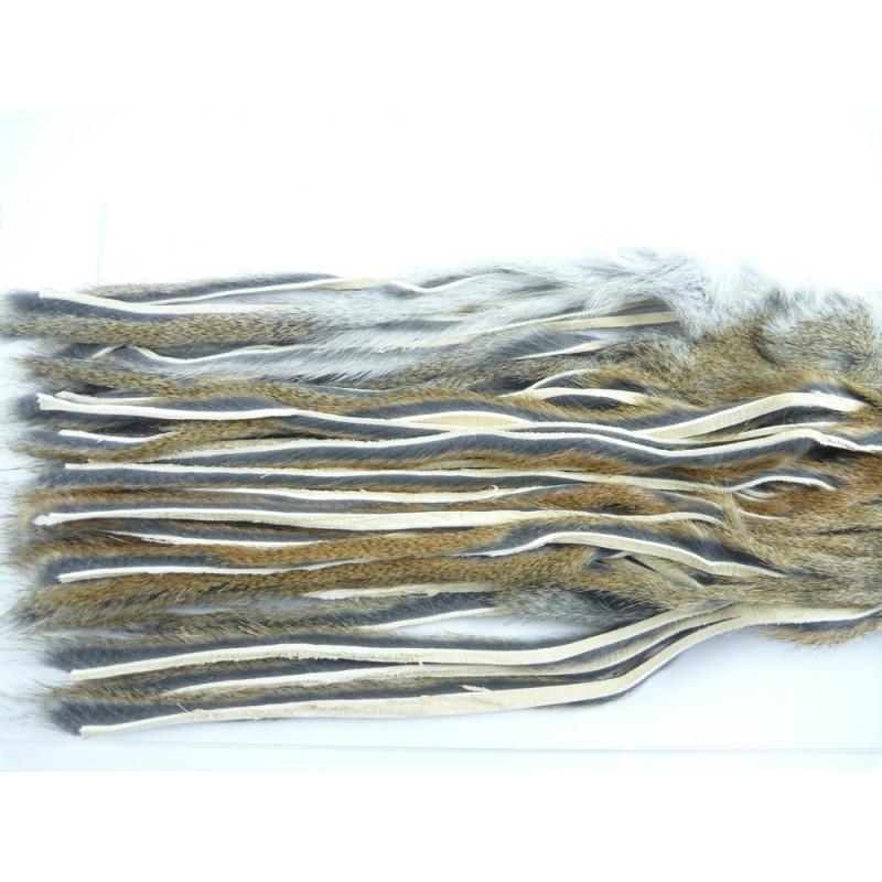 Bandelettes d'écureuil peau complète