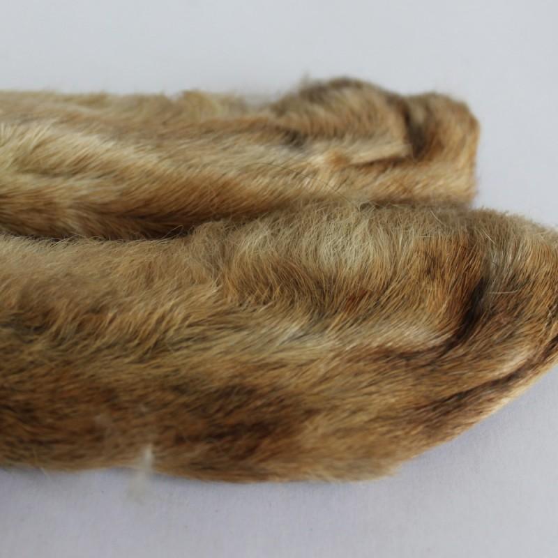 Pattes de lièvre de Patagonie